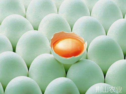 正宗散养鸭蛋