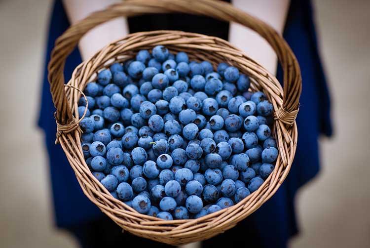 优质新鲜蓝莓