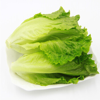 绿鲜知 罗马生菜